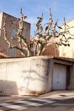 Интересное mediterraneantree и дом в Cassis Стоковое Фото