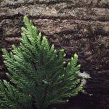Интересные лист Стоковая Фотография RF