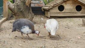 Интересные птицы Стоковые Фото