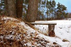 Интересный стенд на деревьях на glade зимы Стоковое Изображение