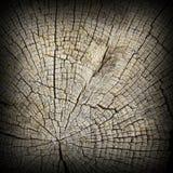 Интересный текстурированный раздел древесины дуба Стоковые Изображения RF