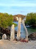 Интересный driftwood на песочном береге стоковое фото rf