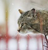 Интересным текстурированный портретом striped кот улицы сидит на str Стоковое Фото