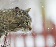 Интересным текстурированный портретом striped кот улицы сидит на str Стоковое фото RF