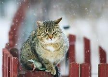 Интересным текстурированный портретом striped кот улицы сидит на woode Стоковые Фотографии RF
