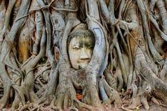 Интересы головы Будды в деревьях стоковая фотография rf