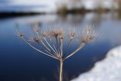 Интерес зимы Стоковые Фото
