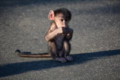 Интерес младенца стоковая фотография rf