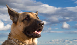 интерес 4 собак Стоковые Фотографии RF