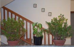 Интерьер дома с 3 горшечными растениями стоковые изображения rf