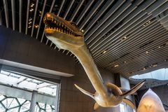 Интерьер 5 музея естественной истории Шанхая стоковое изображение rf