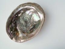 Интерьер раковины Paua Стоковые Изображения