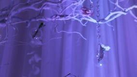 Интерьер украшения залы свадьбы готового для гостей Красивая комната для церемоний и свадеб лестницы портрета платья принципиальн сток-видео