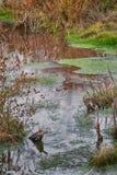 Интимная сцена Fall River с некоторым отражением Стоковое Изображение