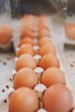 Инфинитно много яичек Стоковые Фотографии RF