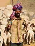 Индеец Shephard с его табуном овец и скотин стоковые фотографии rf