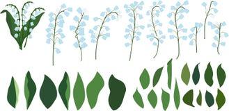 Индивидуальные части лилий долины на прозрачной предпосылке, цветках и листьях Стоковая Фотография