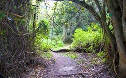 Индигенный лес в Южной Африке Стоковая Фотография
