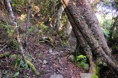 Индигенный лес в Южной Африке Стоковые Изображения
