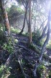Индигенный лес в Южной Африке Стоковые Фотографии RF