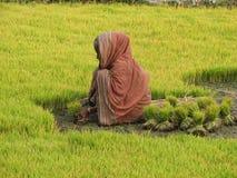 Индийская женщина на поле Стоковые Изображения