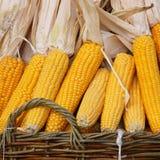 Индийская мозоль: стержни кукурузного початка в корзине - фото запаса Стоковое фото RF