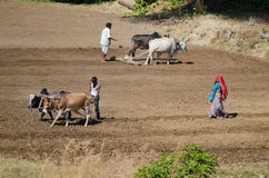 Индийская семья фермера в поле Стоковые Фото