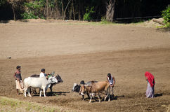 Индийская семья фермера в поле Стоковые Изображения
