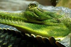 Индийские детали gavials Стоковое Фото
