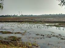 Индийские краны в Alapuzha & x28; Alappy& x29; Стоковые Фото