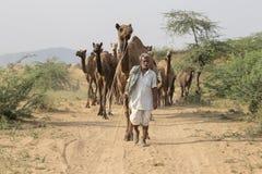 Индийские человек и верблюд в Pushkar, Индии Стоковое Изображение RF