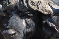 Индийский буйвол накидки Стоковое Изображение