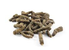 Индийский длинный перец (longum волынщика) Стоковые Фото