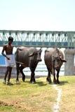 Индийский ковбой стоковое фото