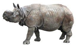 Индийский носорог или большой одн-horned носорог на белой предпосылке Стоковая Фотография