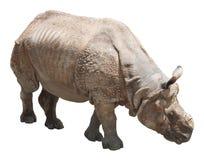Индийский носорог или большой одн-horned носорог на белой предпосылке Стоковая Фотография RF
