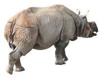 Индийский носорог или большой одн-horned носорог на белой предпосылке Стоковое фото RF