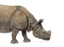 Индийский одн-horned носорог Стоковое Изображение