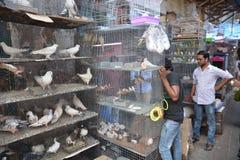 Индийский рынок птицы Стоковые Изображения