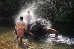 Индийский слон играя в реке стоковые фотографии rf