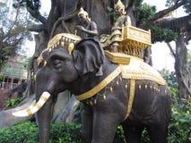 Индийский слон Стоковое Изображение
