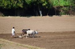 Индийский фермер в поле Стоковое Изображение RF