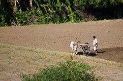 Индийский фермер в поле Стоковое Изображение