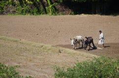 Индийский фермер в поле Стоковые Изображения