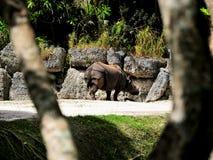 индийский rhinoceros Стоковые Фотографии RF