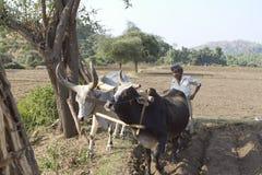 Индийское земледелие Стоковая Фотография