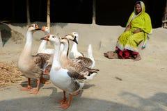 индийское село стоковая фотография rf