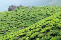 Индия, Керала стоковые изображения rf
