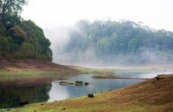 Индия Kumily, Керала, Индия - живая природа Сан Periyar национального парка стоковые изображения