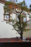 индюк Анталья город старый стоковая фотография rf